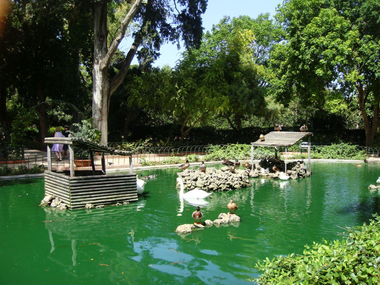 san anton gardens (14)