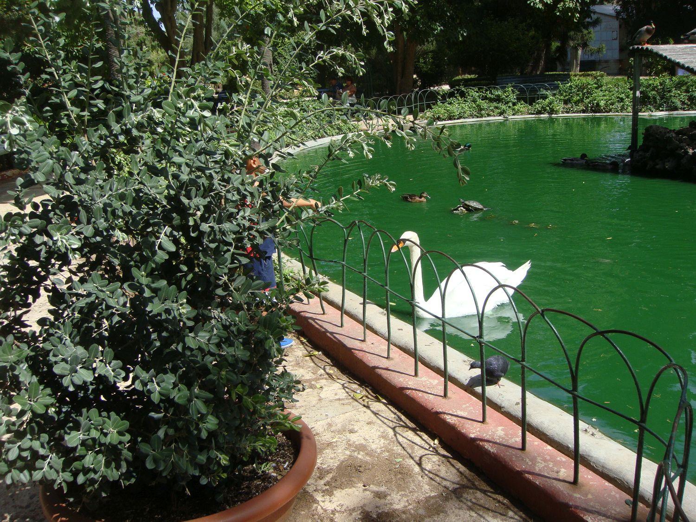 san anton gardens (15)