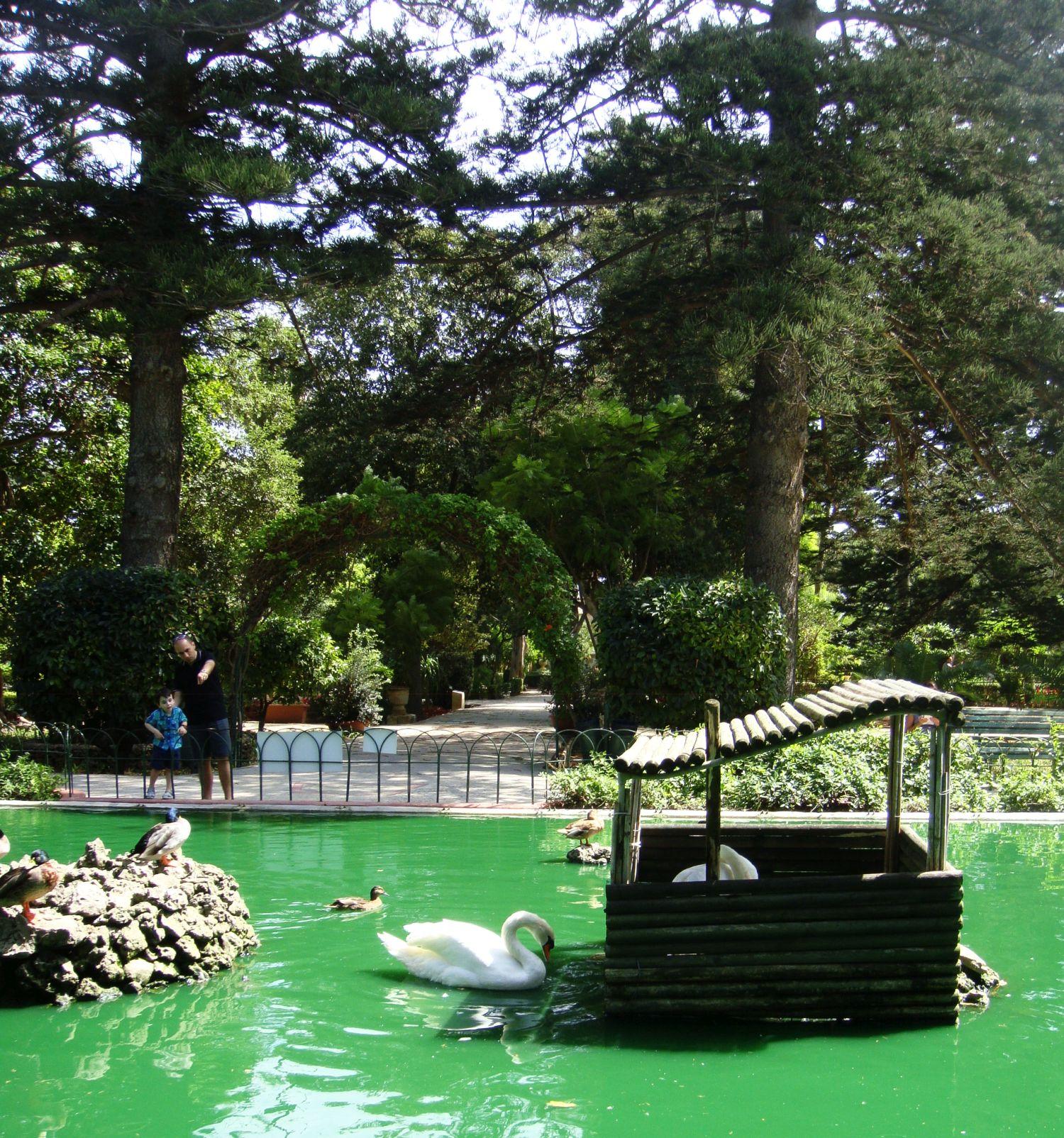 san anton gardens (16)