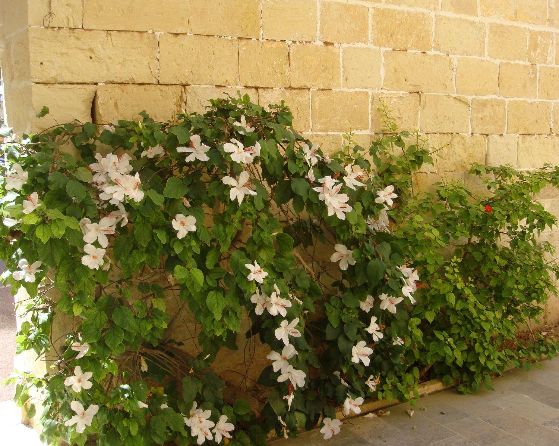 san anton gardens (23)