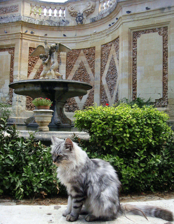 san anton gardens (7)
