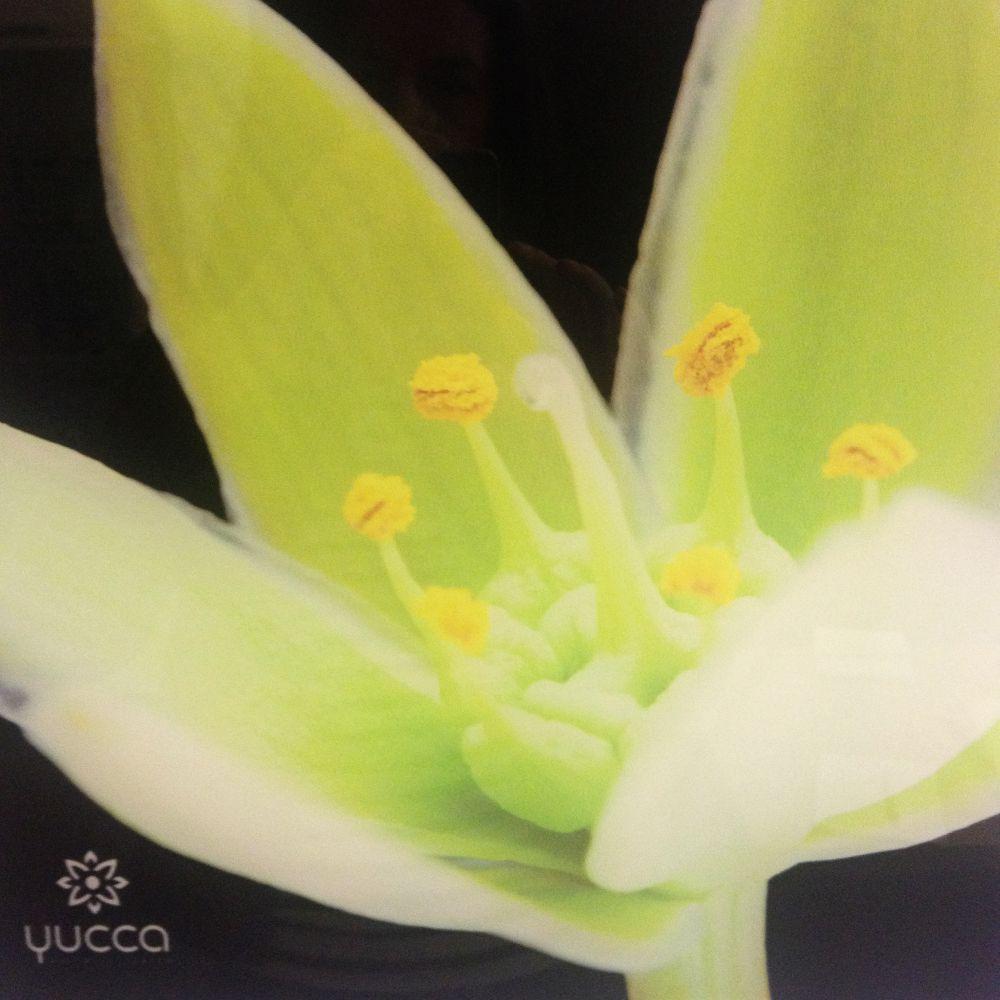 yucca spa (1)